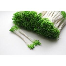 Тычинки зеленые удлиненные