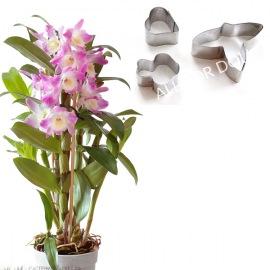 """Каттер """"Орхидея Дендробиум"""""""